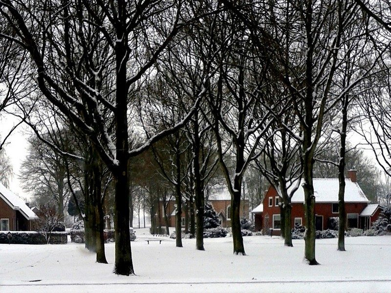 De brink in winters Sellingen