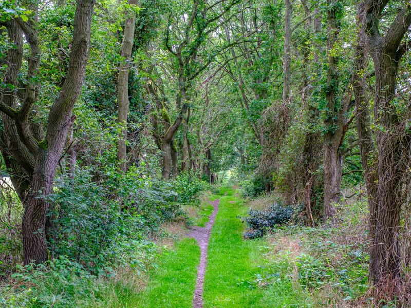 Het bos bij Ter Wupping