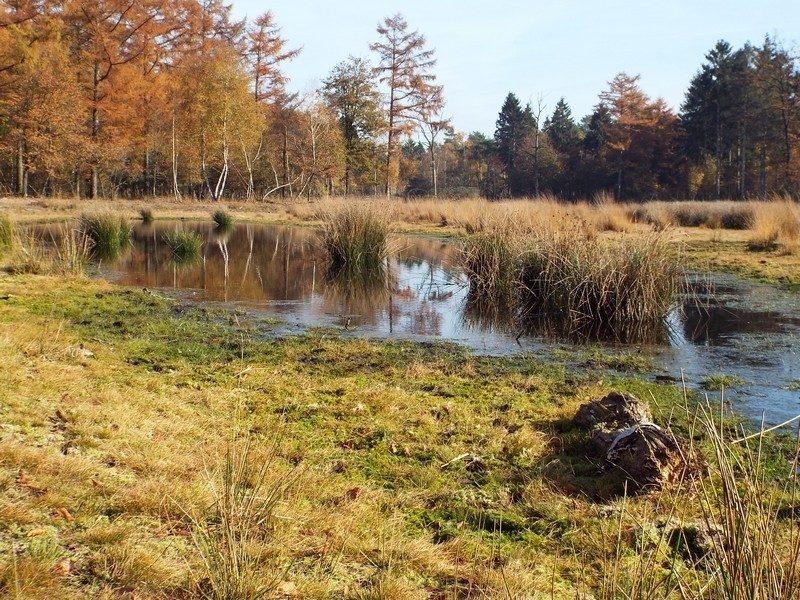 De Maashorst, Slabroek