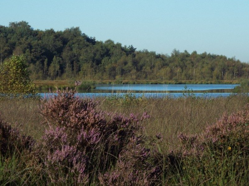 De Groote Peel met in de verte een groot peelven