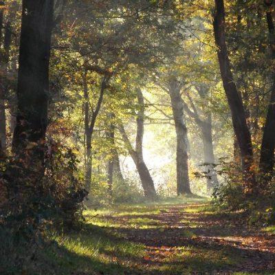 Wandelroute Wellensteyn-tocht, te Nederweert-Eind