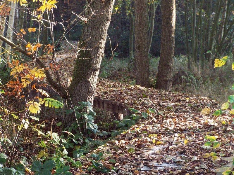 Een van de bosgebiedjes
