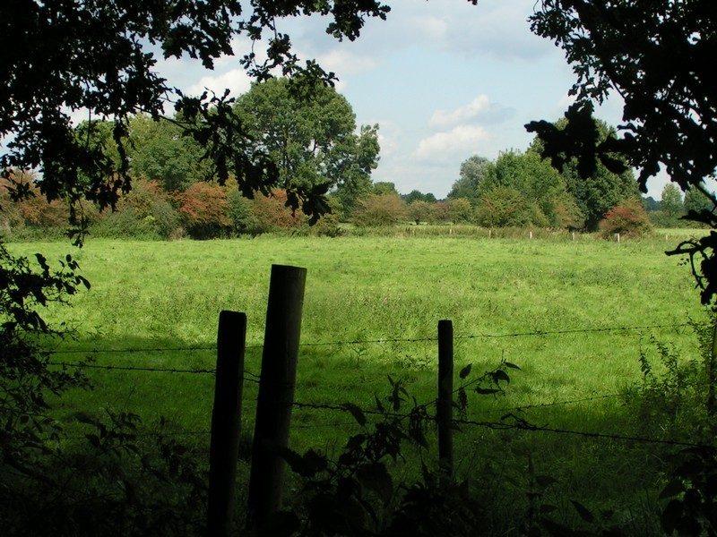 Maasheggenlandschap