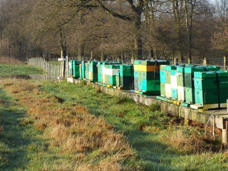 Bijenkorven in het Heijkersbroek