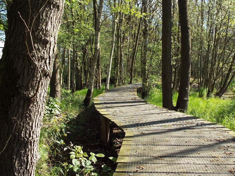 Knuppelbrugje door het broekbos