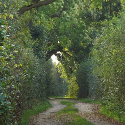 Wandelroute Een oud landschap-de kleine tocht, te Vierlingsbeek