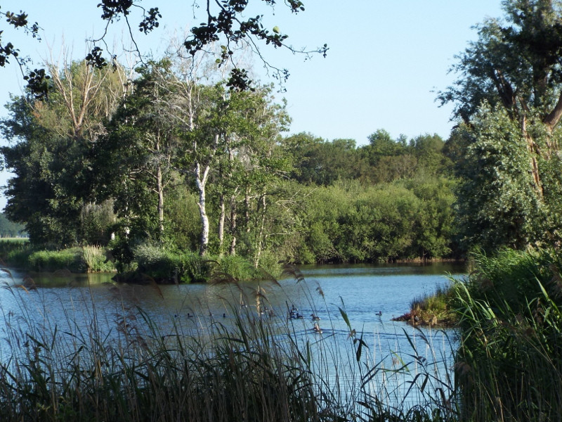 Waterrijkgebied de Kwegt