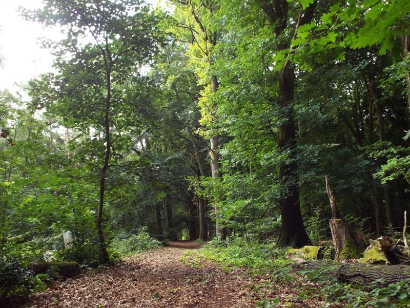 Het Spaanse Bos