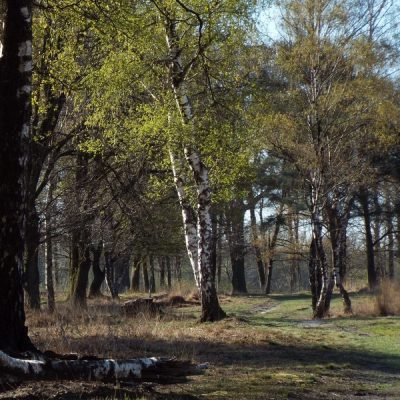 Wandelroute Scherliet-tocht, te Grashoek