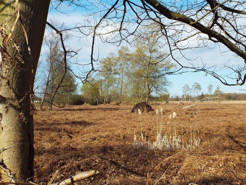Natuurgebied Heitrakse Peel