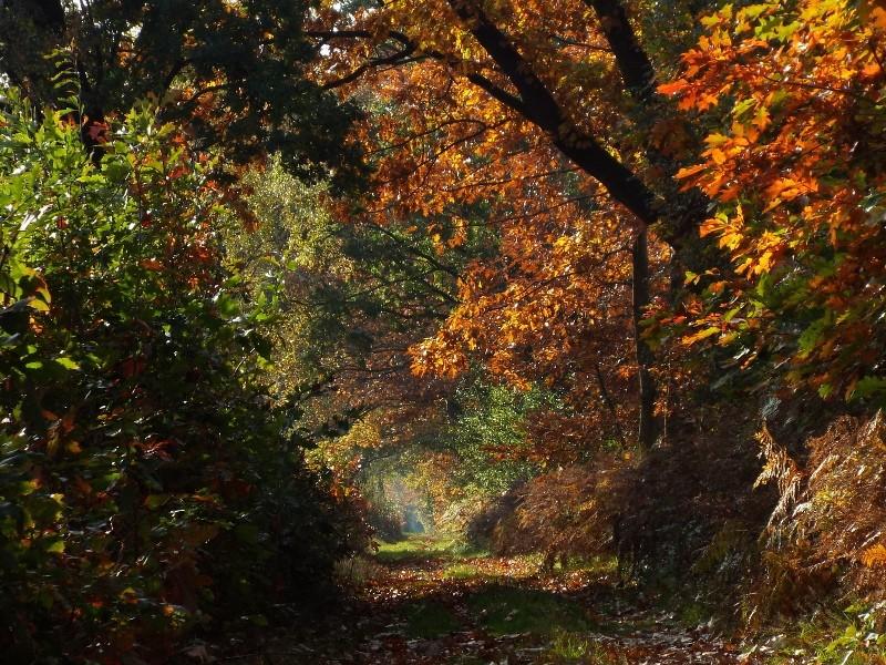 Pad door het bosgebied Marisberg
