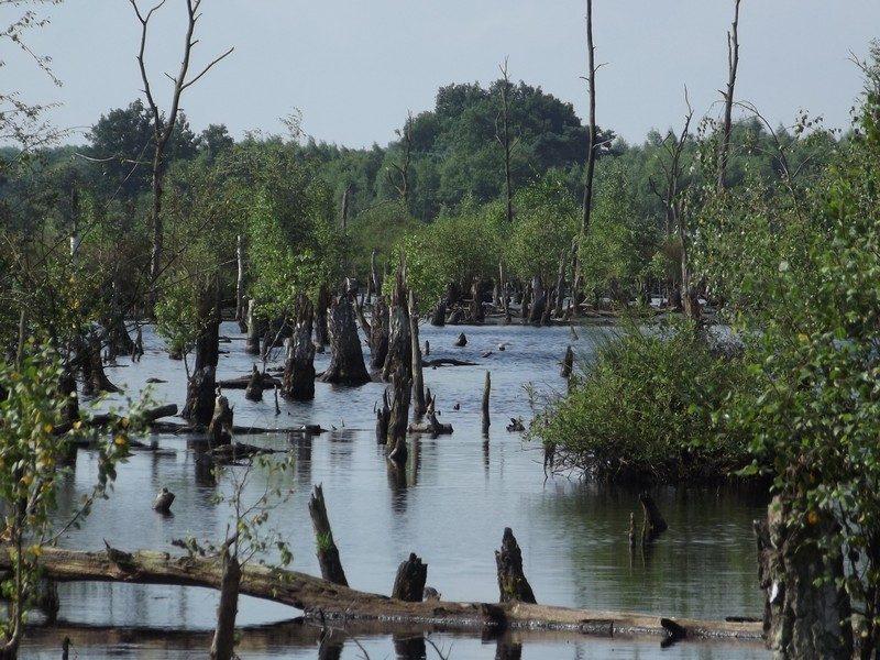 Mariapeel, van boom naar kienhout