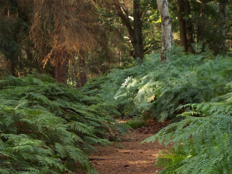 Pad door het Broemeerbos