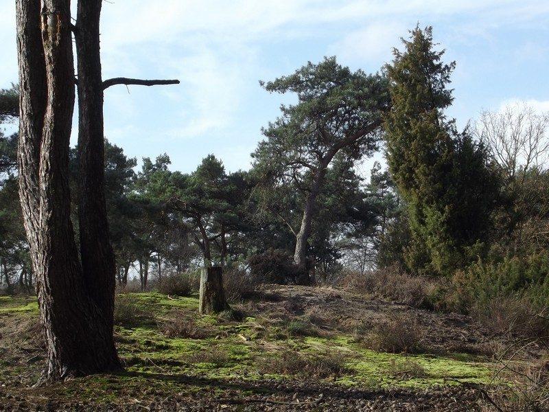 Het bosgebied Schatberg