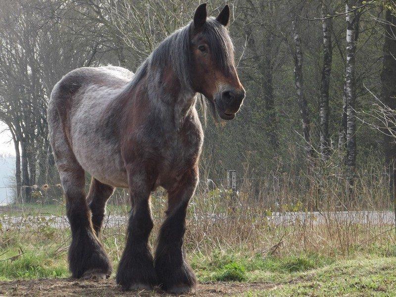 Paard in de Schadijkse bossen