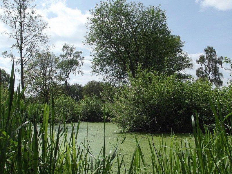 Natuurgebied Molenbeekdal
