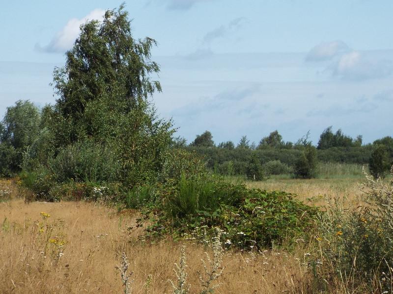 Hoogveengebied 't Molentje