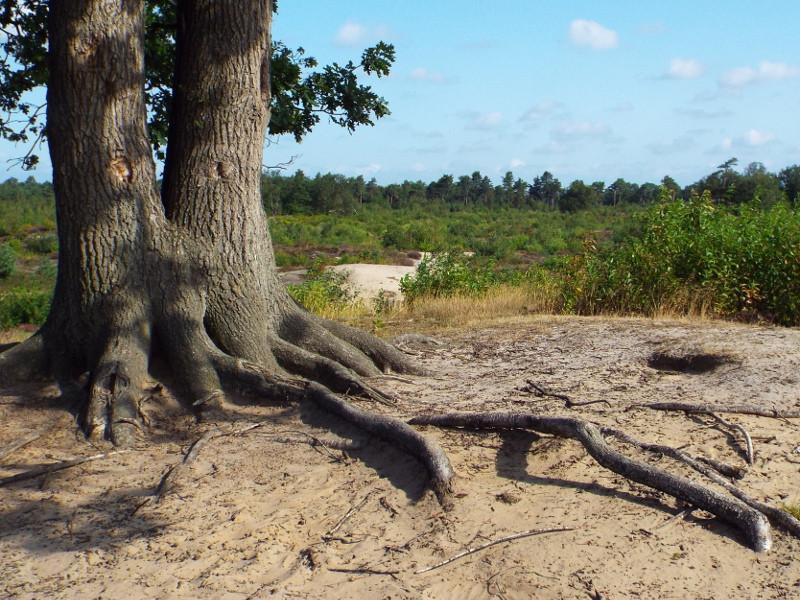 Schadijkse bossen