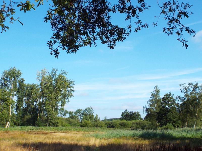 Natte graslanden in het Molenbeekdal
