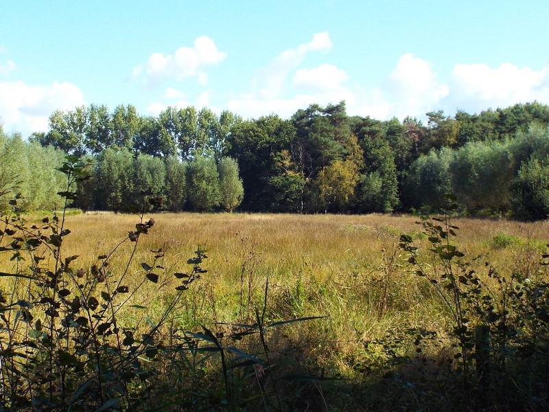 Nat grasland in de Heesbeemden