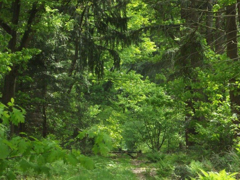 Testrik bossen nu in een ander seizoen