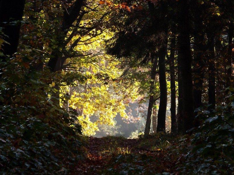 Gemeentebossen de Kempkensberg