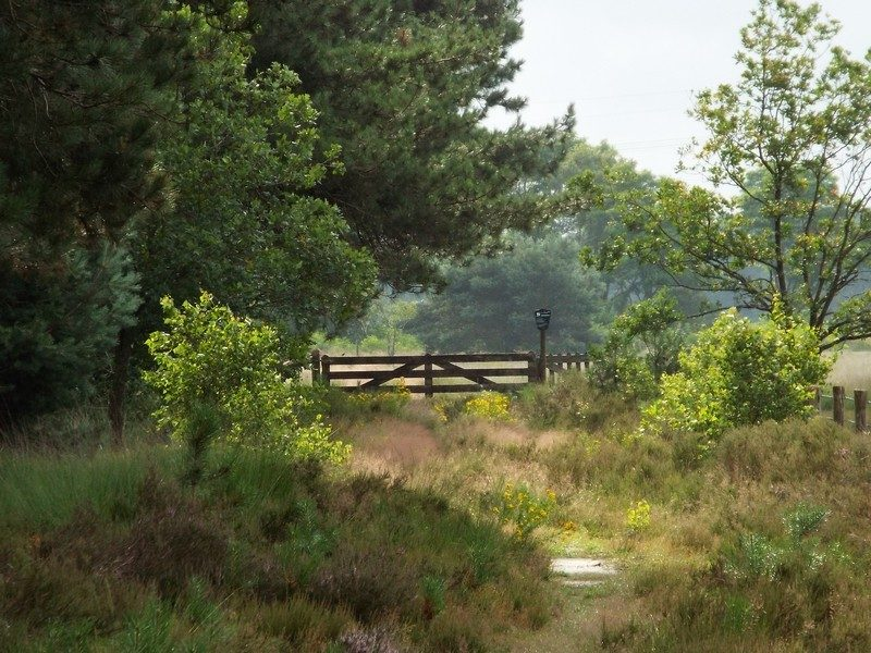 Bosgebied Zwartwater