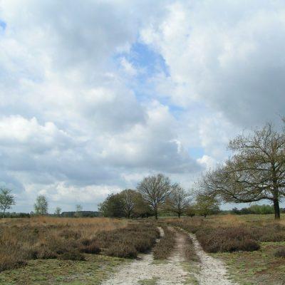 Wandelroute Peelpad etappe 21, te Landhorst
