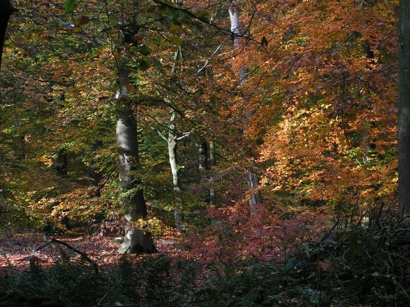 De Groote Slink in een herfst sfeertje