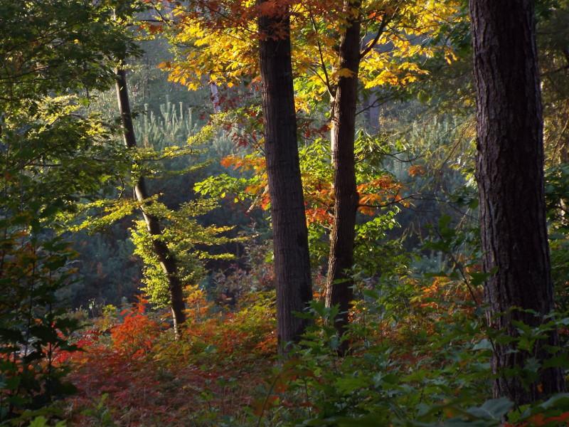 Nogmaals in herfstkleuren
