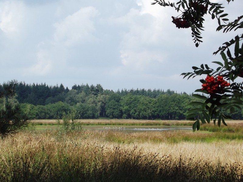 Nat grasland in Rovertsche Heide