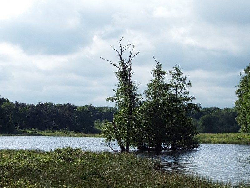 Natuurgebied Langven en de Maurik, het ven 'Langven'