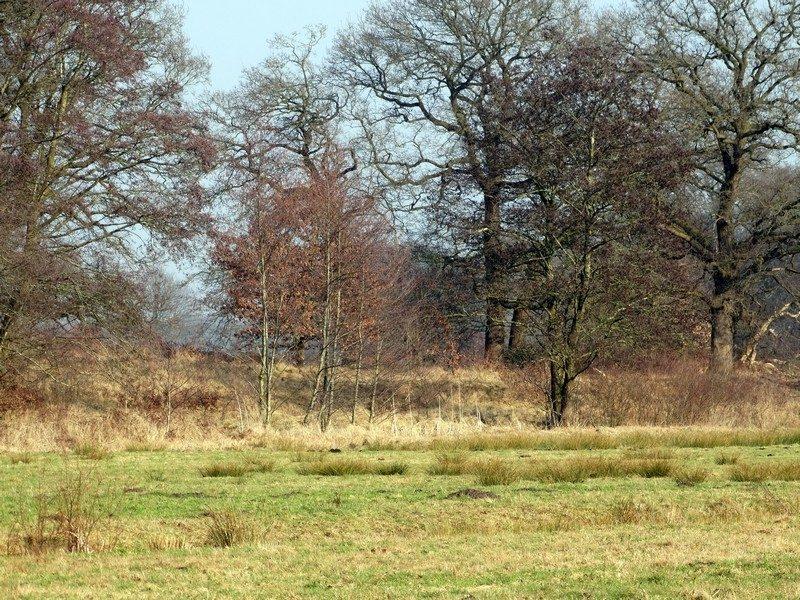 De Roege Baarg, een oud landschap