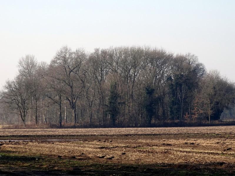 De Giezelbaarg gezien vanaf de Westerweg