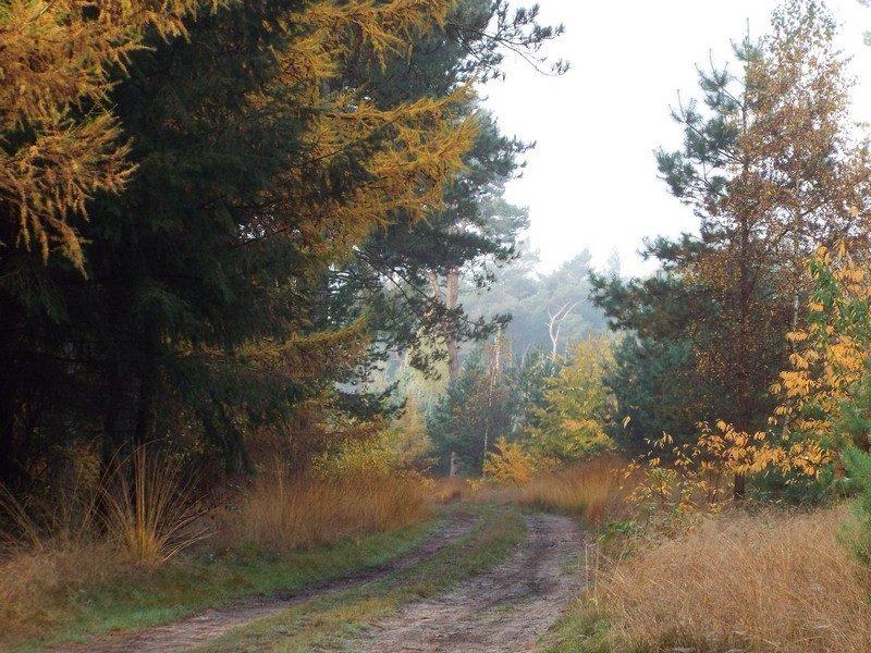 Het Leenderbos