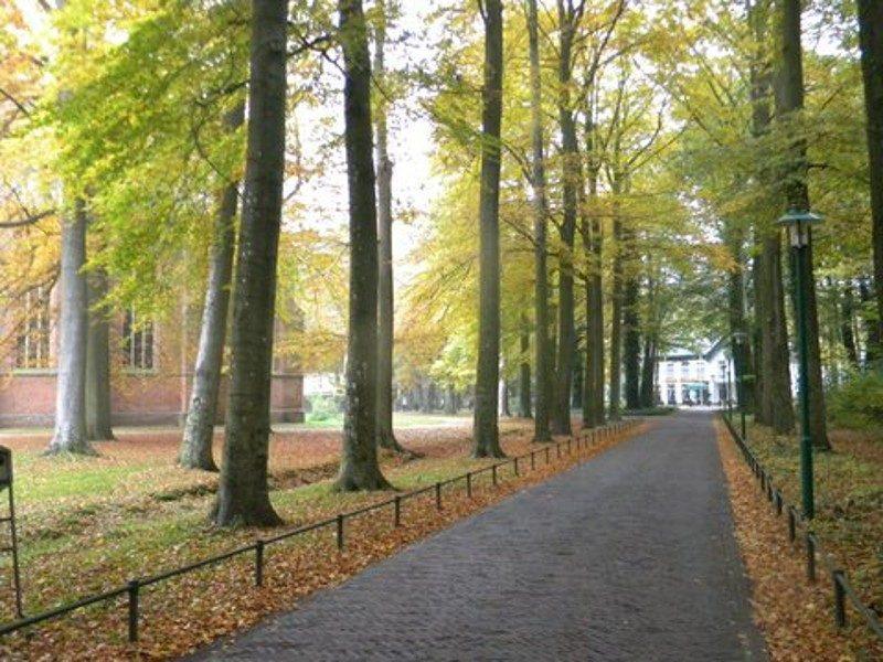 Herfst aan de Boslaan