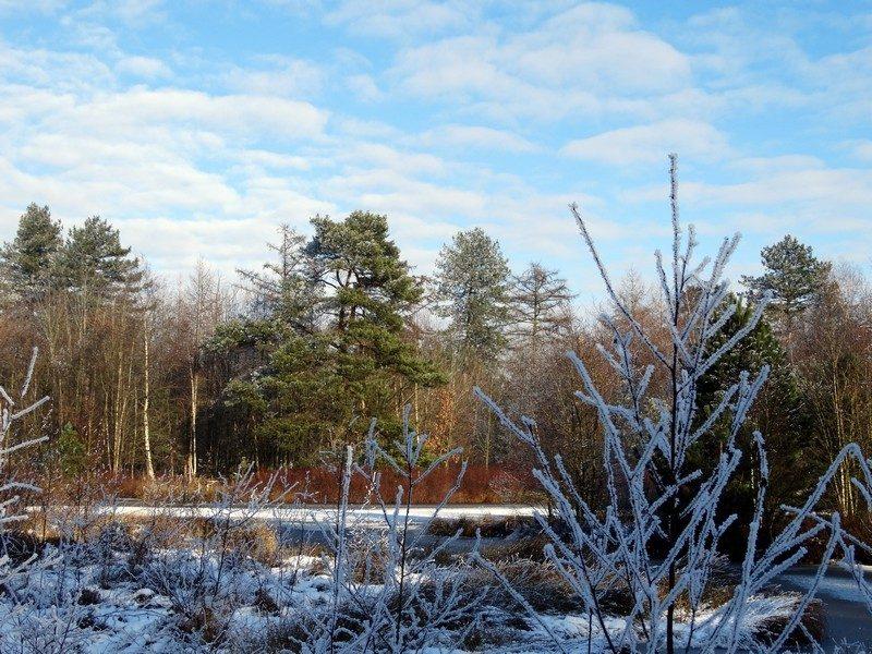 Winter in Jipsinghuizen