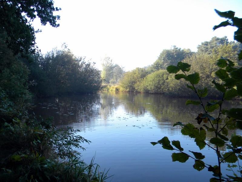 Tussen de Rijsdam en Sellingen