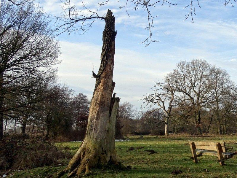 Dode bomen blijven staan in het Metbroekbos