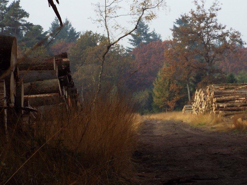 Houtoogst in het Leenderbos