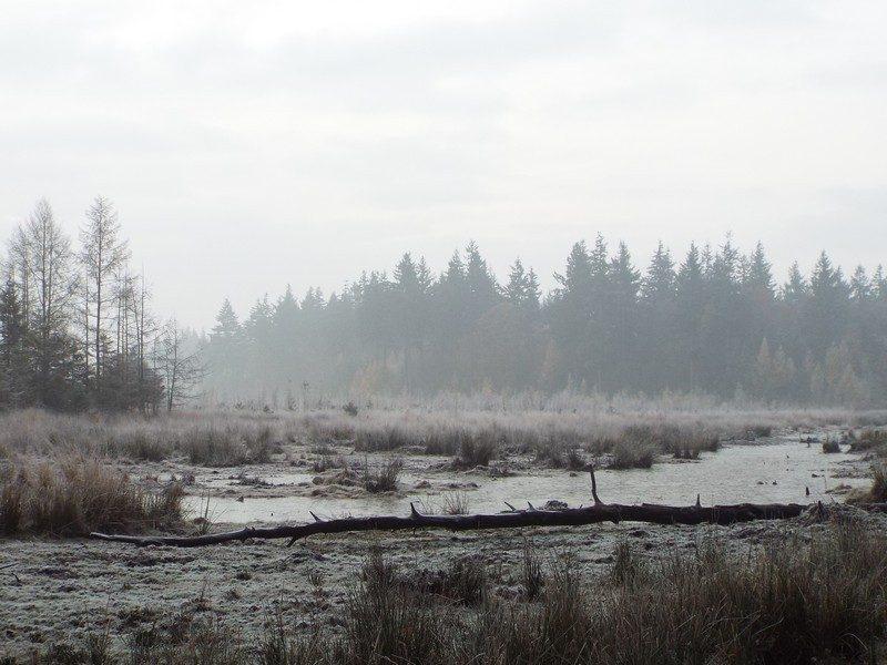 Het Leenderbos, het Laagveld