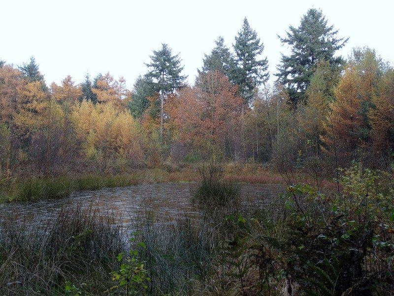 Een bevroren ven in het bos