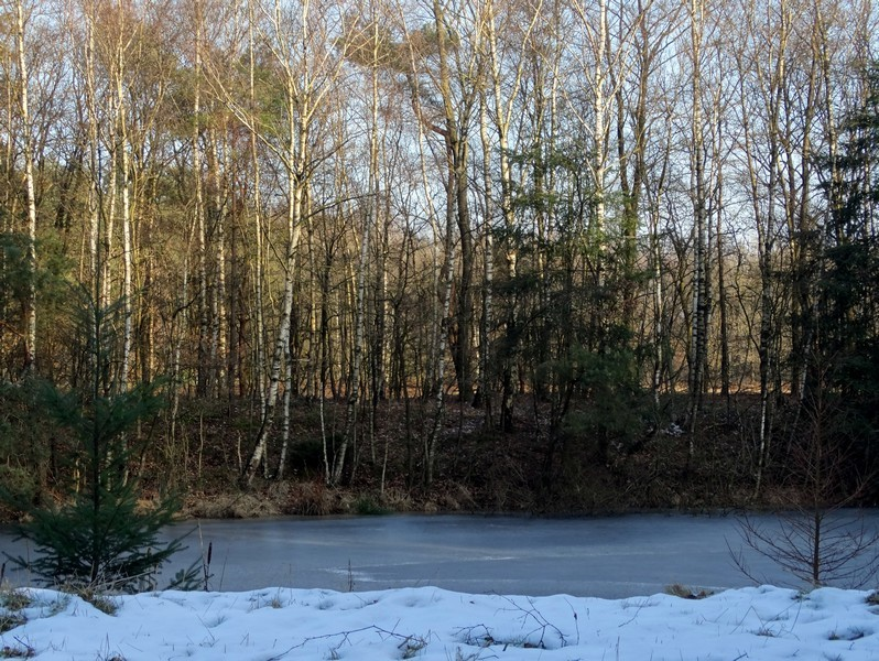 Het ven bij het boswachtershuis