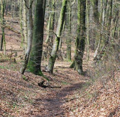 Wandelroute Duivelsberg, te Berg en Dal