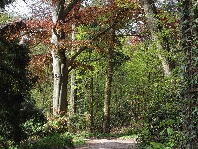 Laan met imposante bomen in landgoed Zegenwerp