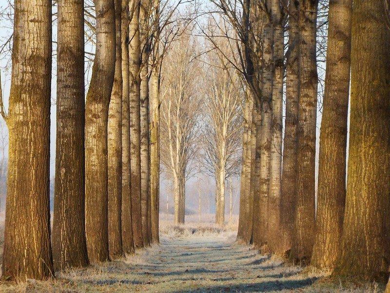 Natuurgebied 't Sohr, klimaatbuffer