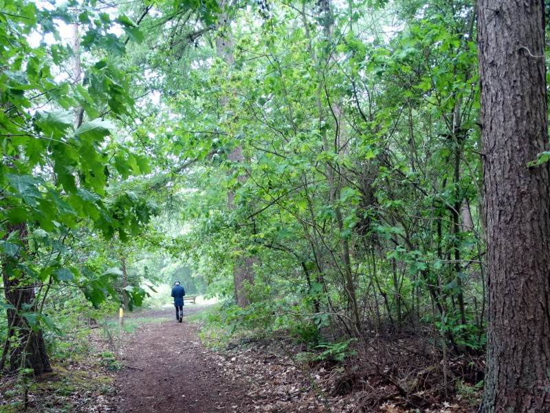 In het bos van Jipsingboertange