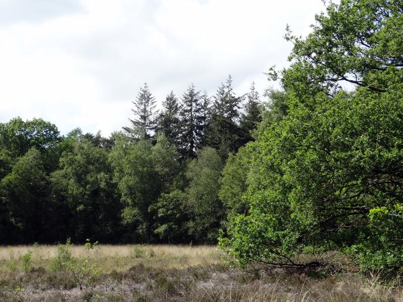 Een open plek in het bos van de Beetse