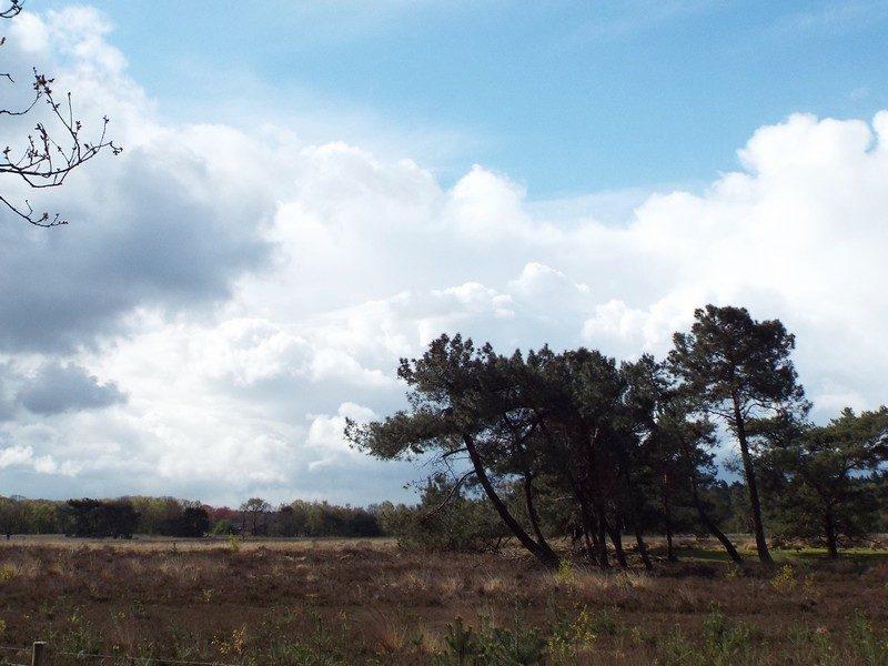 Heidegebied bij de Bunthorst