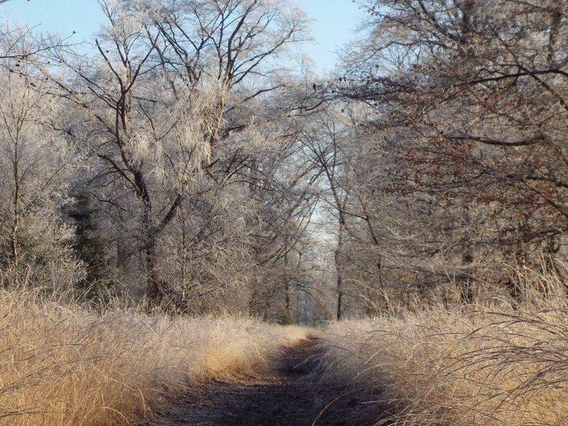De Sijp op een koude winterdag